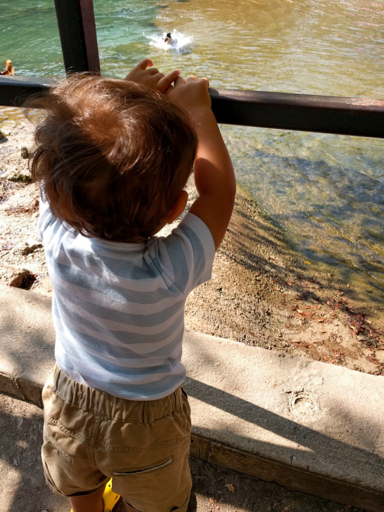 Toddler holding fence looking at spring pool - Austin, TX family-friendly itinerary
