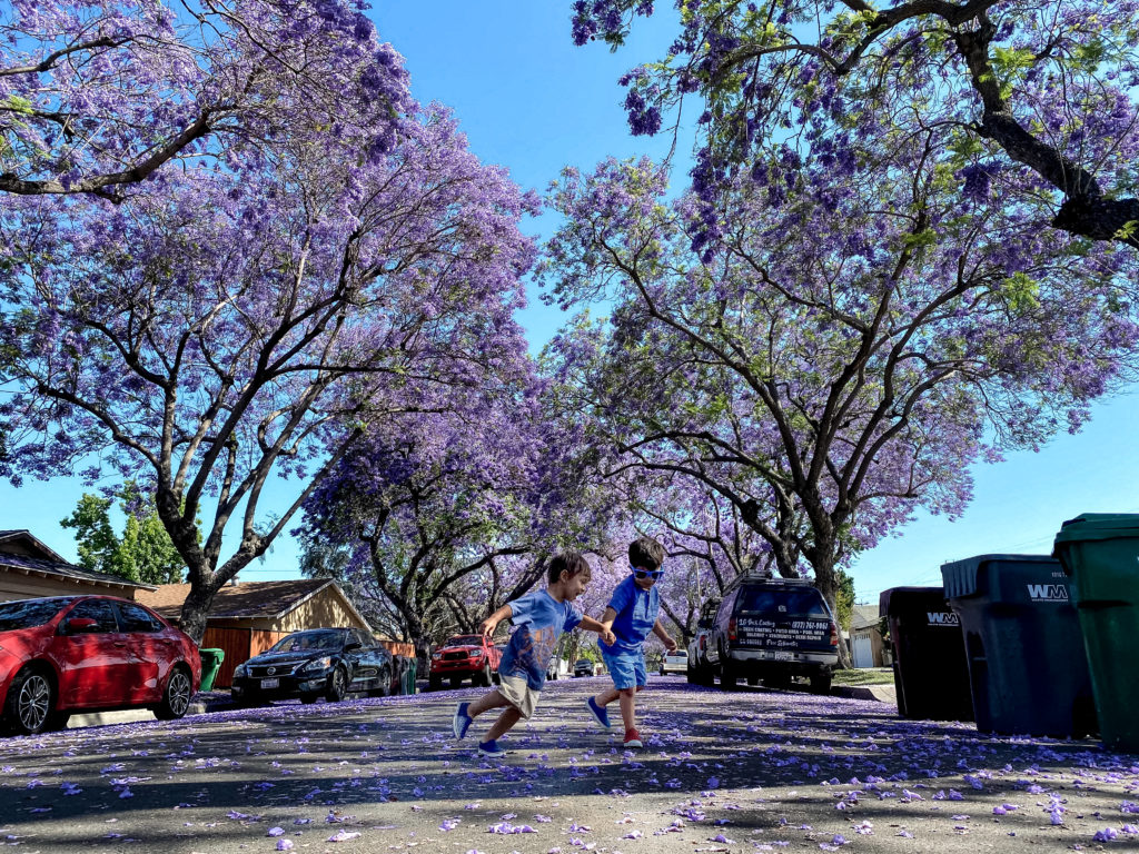 Toddler brothers dancing in the purple rain of Jacaranda trees in California